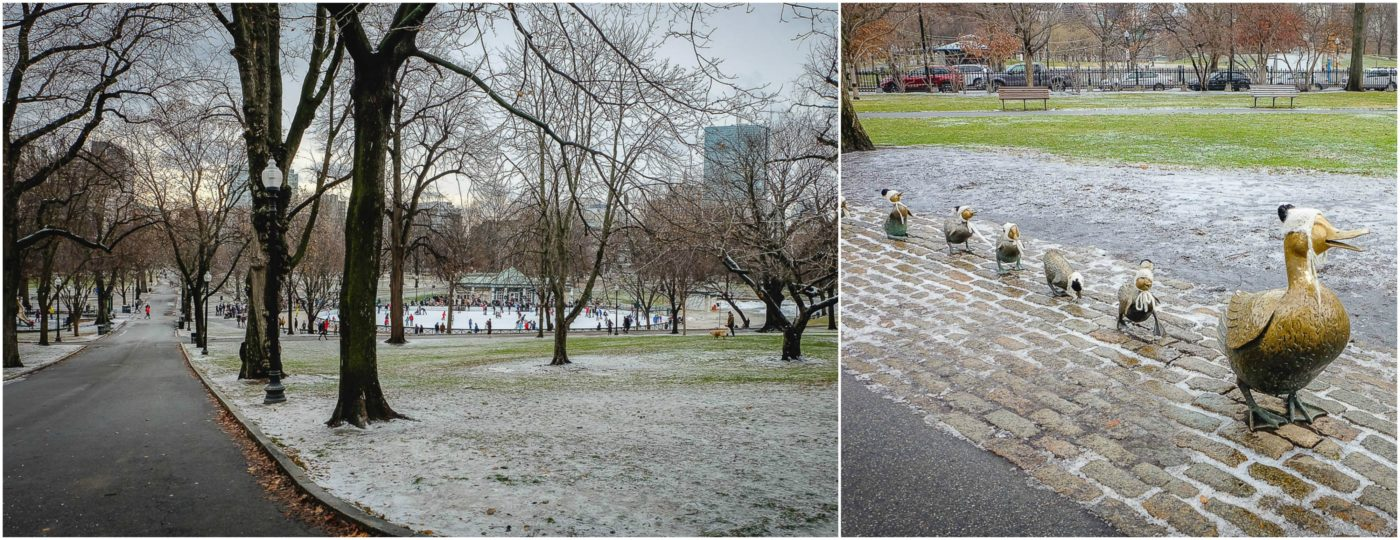 boston common duck