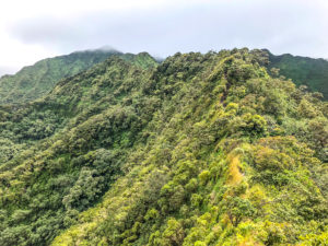Moanalua Valley Trail 2